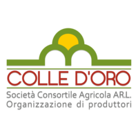 logo png 800.png
